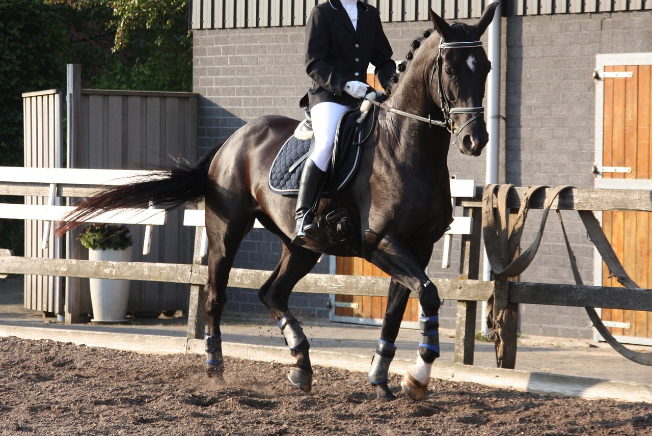Dressage rider and horse